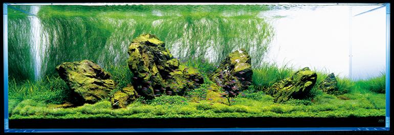 66 Gallon Bookshelf Aquarium