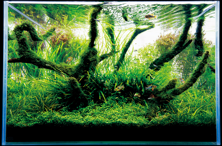 Nature Aquarium Photographs AmanoTakashi.net