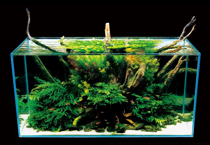 Nature Aquarium Photographs