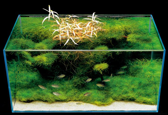 аквариум цены