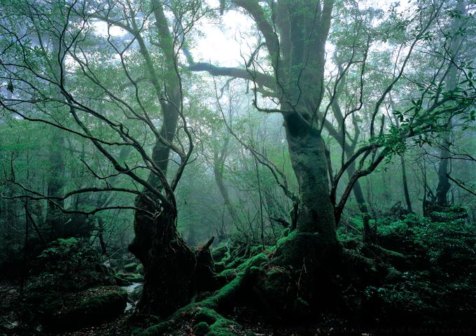 YAKUSHIMA Island Photographs | AmanoTakashi.net